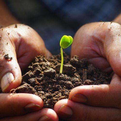 Zo blijven je kruidenplantjes goed